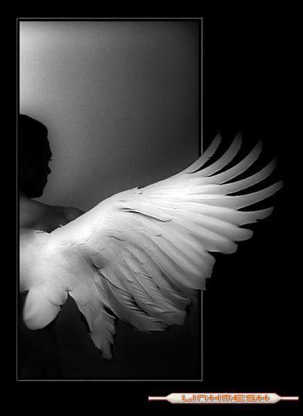 ángel caído | Siempre amanece